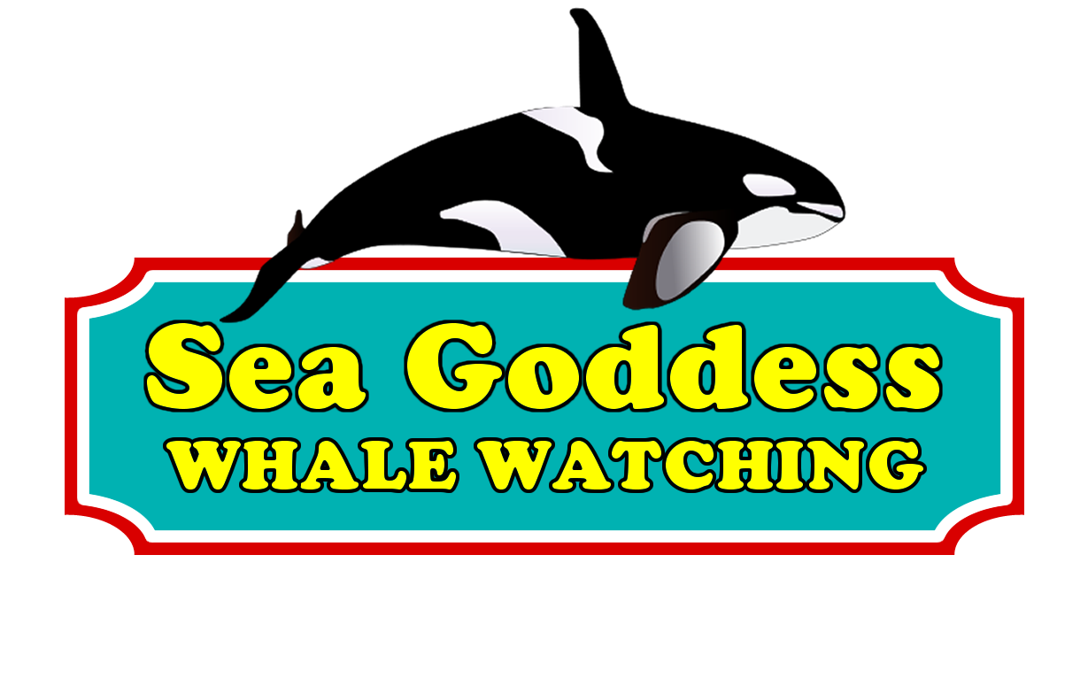 sea-goddess-whale-watching